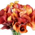 Orange/Rust Mini Calla Lilies