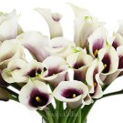 Purple and Cream Mini Calla Lilies