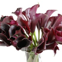 Black/Deep Purple Mini Calla Lilies