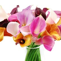 Choose your colors of mini callas