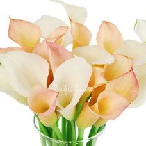 Coral Passion & White Blend Mini Calla Lilies
