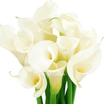 Large White Calla Lilies