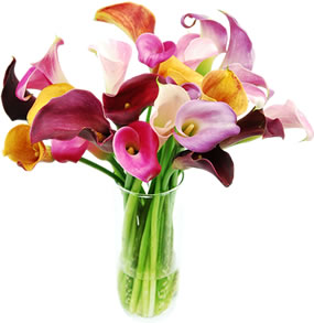 Calla Lily Tips and Tricks